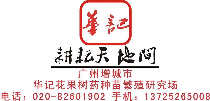 广东省广州增城市华记苗圃场