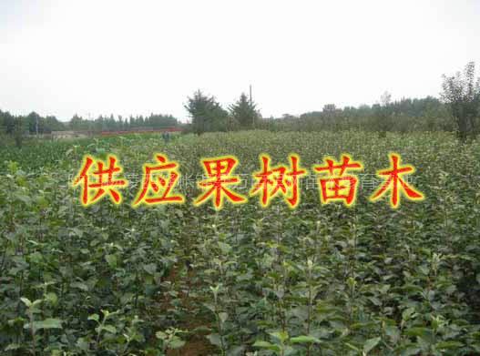 陕西杨凌锦绣万亩果树苗木繁育基地