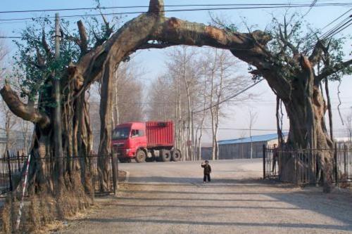 桓仁縣假樹廠家假樹假山設計 桓仁縣水泥假樹可安裝施工