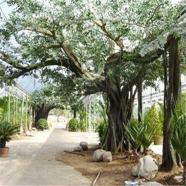 明山假树厂家假树景观定制 明山水泥假树现场设计
