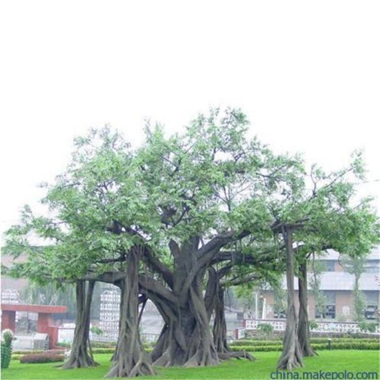 安國市假樹廠家仿真樹門口圖片 安國市水泥假樹廠家直營
