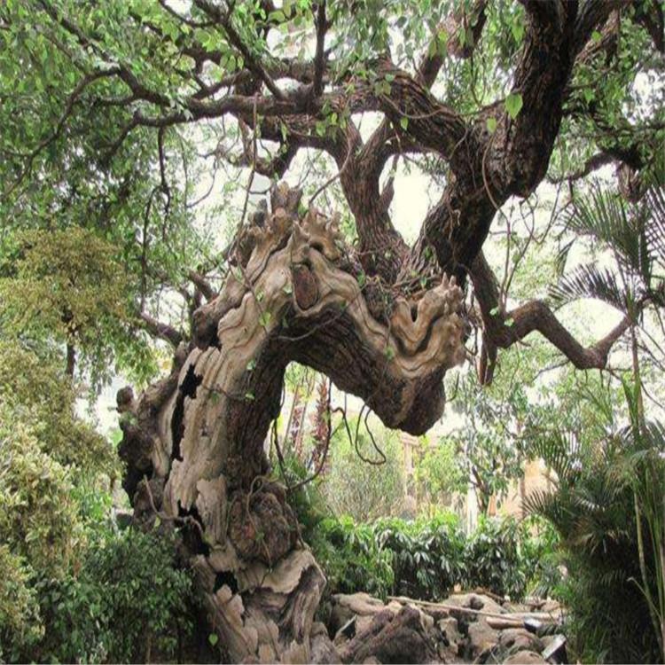莱阳市假树厂家室内假树施工队 莱阳市水泥假树厂家出售