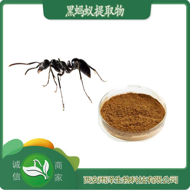 黑蚂蚁提取物黑蚂蚁粉