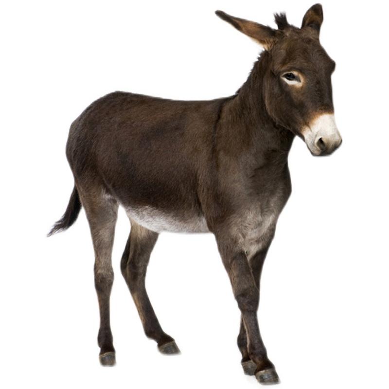 催驢寶 新一代肉驢促長劑