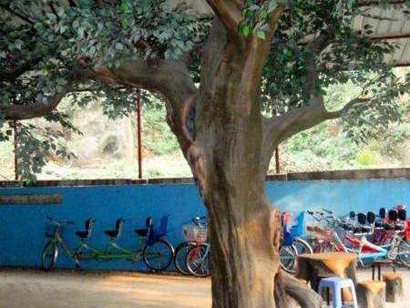 開發區室內假樹_室內假樹制作_天成怡景景觀造景工程