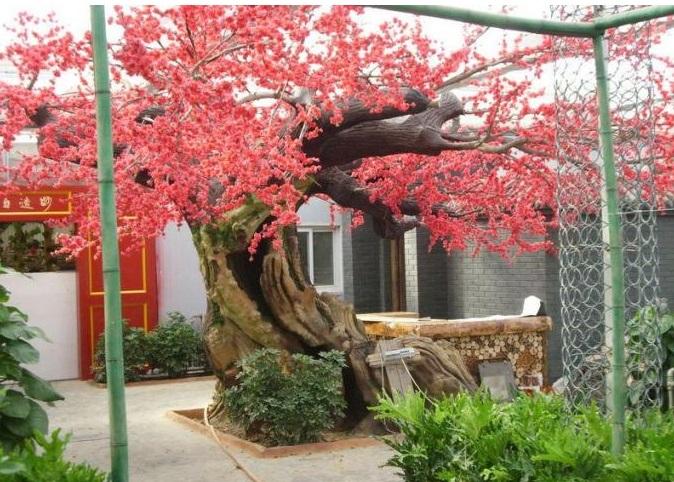 水泥假树 (346).jpg